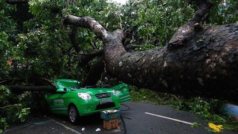 Không được đậu xe dưới cây to, rất dễ gây ra nguy hiểm cho bạn